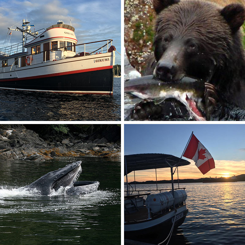Grizzly and Whale Adventure Tour